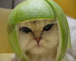Lime_head
