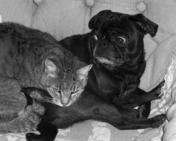 Pug_and_cat